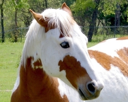 10 life-saving animals: Horse protects owner | Animals Make Life Better | Scoop.it