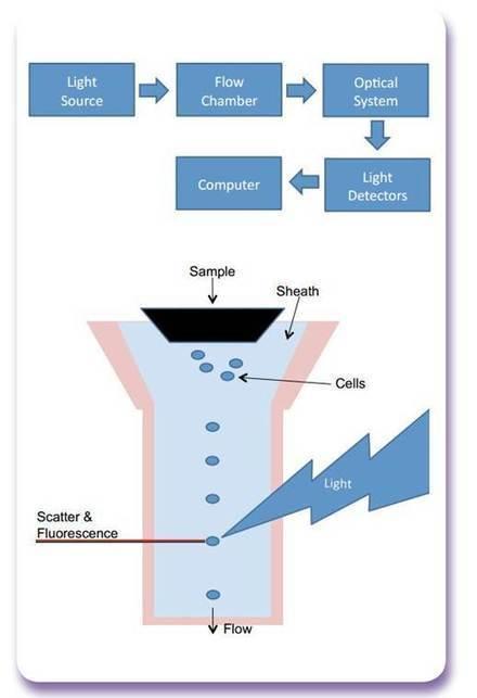 Flow cytometry – sample preparation & experimental design | Innova Biosciences | biologic hematology | Scoop.it