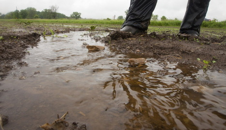 Changes in America's Dairyland foul the waters of Green Bay | Sustain Our Earth | Scoop.it