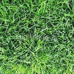 Selection of right Turf Supplier based on the needs. | Lawn Turf Suppliers | Scoop.it