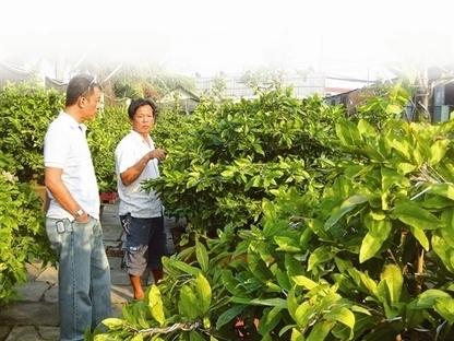 Il fiore di albicocco - simbolo del TET in Vietnam | Mi piace il Vietnam | Scoop.it