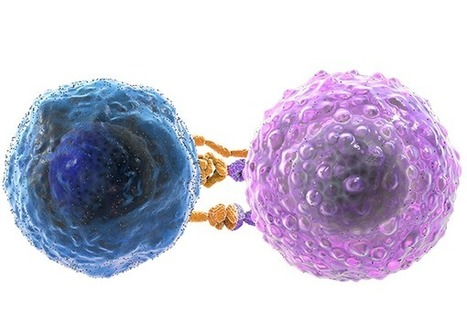 B and T Cells and the Immune System | MS Immunology | Cancer Immunotherapy Review | Scoop.it