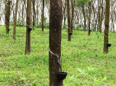 Demand Tire Companies Help End Deforestation | GarryRogers NatCon News | Scoop.it