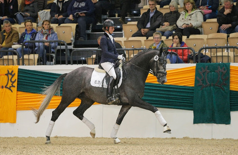 Hopkins is the Most Expensive Riding Horse at Trakehner Auction in Germany | Fran Jurga: Equestrian Sport News | Scoop.it