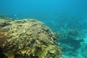 Brazil lost 80 percent of coral reef in 50 years | Water Stewardship | Scoop.it
