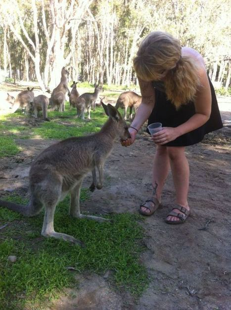 Currumbin Wildlife Sanctuary, Queensland, Australia | toemail | Gold Coast Tourism | Scoop.it