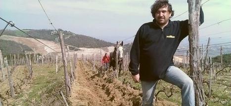 la vigne et la biodynamie | agriculture, alimentation et autres fables | Scoop.it