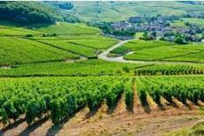 Intempéries: la production de vin française devrait baisser de 8% en 2016, Viticulture - Pleinchamp | Winemak-in | Scoop.it