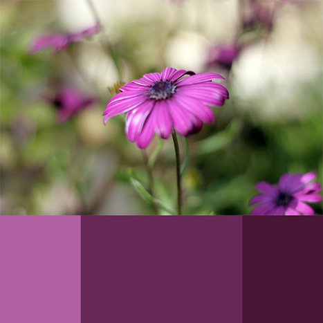 Selecting Your Own Color Scheme | Webdesigntuts+ | Colors in Web Design | Scoop.it