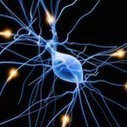 Possible Multiple Sclerosis Treatment Found | Skin Diseases | Scoop.it