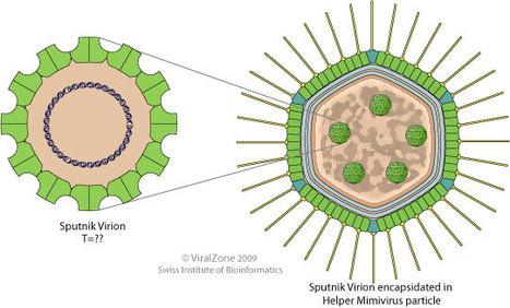 Diversity of Virophages in Metagenomic Data Sets | Lentivirus | Scoop.it