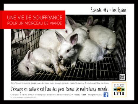 Une vie de souffrance pour un morceau de viande / Le Huffington Post   Lapins - Revue de presse L214   Scoop.it