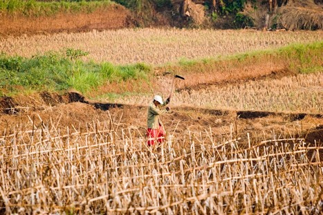 New Climate Change Report Outlines Challenges for Global Agriculture - Modern Farmer   Sustain Our Earth   Scoop.it