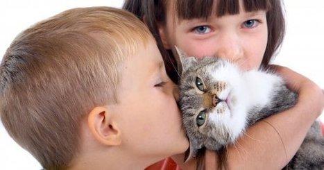 Mascotas y patologías oculares de cuidado | Salud Visual 2.0 | Scoop.it