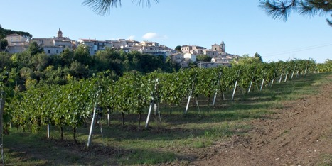 Best Le Marche Wines: 5 Grapes Bibenda 2015 | Wines and People | Scoop.it