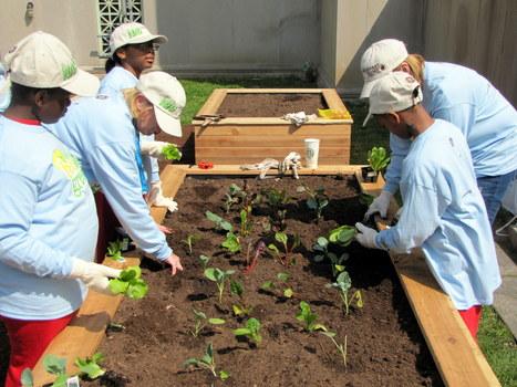 California School Garden Network   Kids Going Green!!   Scoop.it