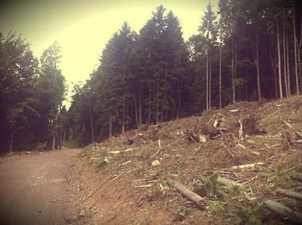 Pourquoi les forêts privées d'Alsace sont défigurées - Rue89 Strasbourg   A voir et à savoir autour de chez moi   Scoop.it