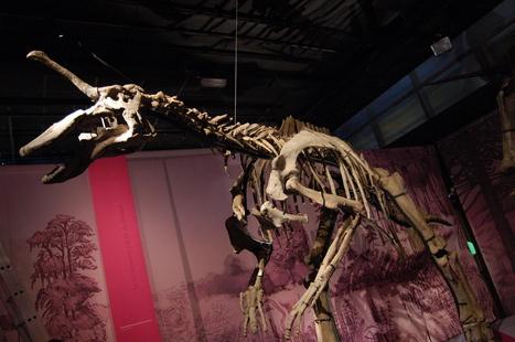 Tsintaosaurus, Unicorn No More | Paleontology News | Scoop.it