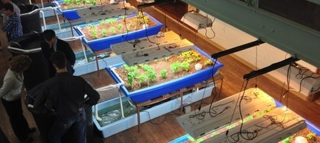 Aquaponics: Urban, Local, Sustainable, But How Does It Work Exactly? | Yan's Earth | Scoop.it