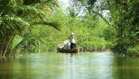 290 nieuwe planten- en 77 nieuwe diersoorten ontdekt in Mekong-regio | 2014 | Scoop.it