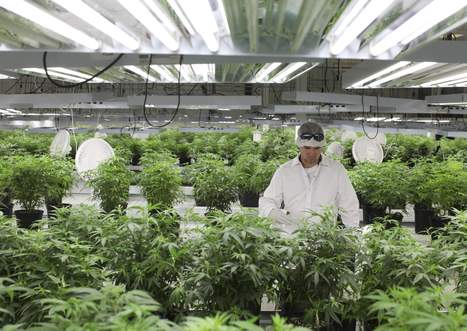 Cannabis replaces chocolate in vacant Canadian factory - Worcester Telegram | Sports Facility Management 4349386 | Scoop.it