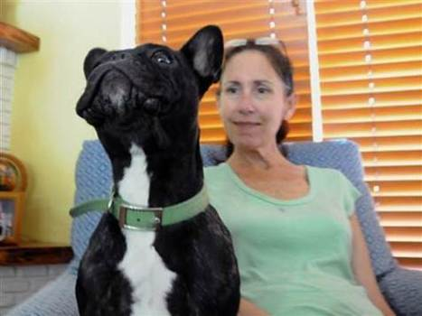 French Bulldog Inspires Woman with ALS   MND to Write Again   #ALS AWARENESS #LouGehrigsDisease #PARKINSONS   Scoop.it