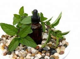 Discover All Advantages of Peppermint Oil   Shrewd Foods   Scoop.it