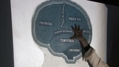Paris : un centre de gym pour muscler son cerveau devrait voir le jour d'ici fin 2013 - France 3 Paris Ile-de-France | Le meilleur de vous | Scoop.it