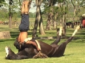 Horse yoga, father-son dance duo and more links we love right now - 2014-Apr-12 | horse-celebrities | Scoop.it