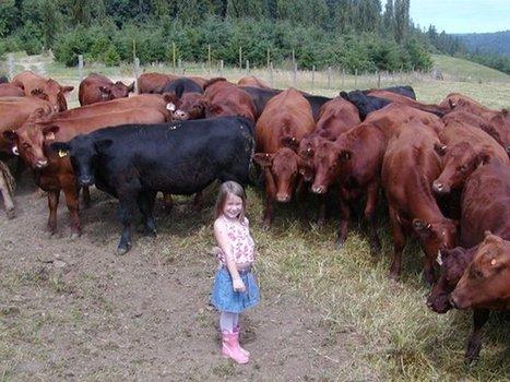 Grass Fed Beef Seattle | forestcattle | Scoop.it