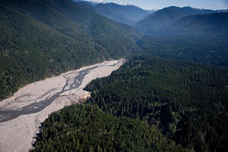 River Revives After Largest Dam Removal in U.S. History | Biodiversity protection | Scoop.it