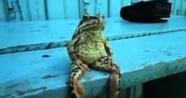 Gawker: We want to elevate the discourse about frogs who sit like humans [CHART] | Journalism Issues | Scoop.it