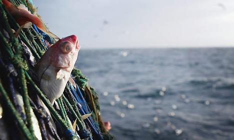 Alex Salmond's fisheries threat to EU alarms industry | Referendum 2014 | Scoop.it