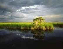 FL sugar farmers helping to clean up the everglades | The Everglades Puzzle | Scoop.it