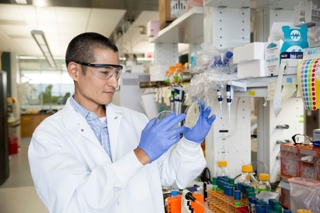'Super yeast' has the power to improve economics of biofuels | DNA and RNA Research | Scoop.it
