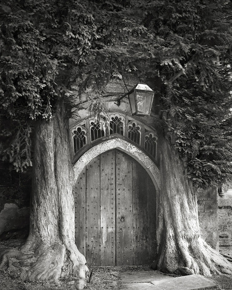 Photographer Beth Moon Spends 14 Years Photographing the World's Oldest Trees | Fstoppers | Beautiful Things | Scoop.it