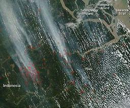 Illegal Fires Set in Indonesia Cause Smog Problem   Sustain Our Earth   Scoop.it