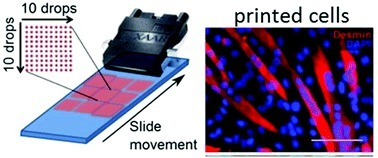 New bio-ink formulated to print living human tissue   DigitAG& journal   Scoop.it