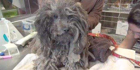 This Abandoned Dog With Dreadlocks Gets Rescued And Receives Lots Of Love | Xposed | Scoop.it