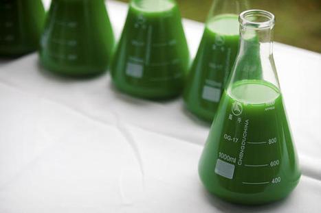 La biomasse, nouvel eldorado de la chimie ?   La technologie au collège   Scoop.it