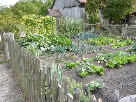 Vegetable Garden Planning for Beginners ~ Great Resource   Auntie ...   Gardening   Scoop.it