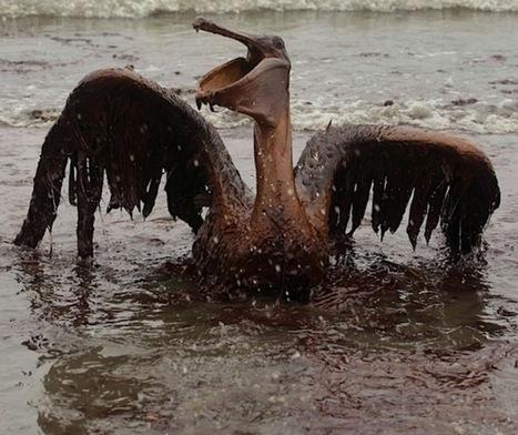 13 citations pour ne pas oublier le désastre pétrolier du Golf du Mexique | Chronique d'un pays où il ne se passe rien... ou presque ! | Scoop.it
