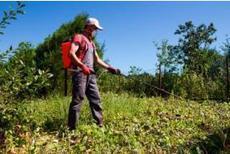 Glyphosate : Monsanto n'accepte pas la décision de la ministre française | Questions de développement ... | Scoop.it