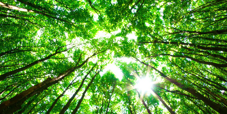 Why Do Forests Matter? A Call to Conserve the Last Great Forests   Sciences   Scoop.it