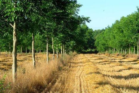 La France replante des arbres dans ses champs   développement durable : quel avenir voulons-nous ?   Scoop.it