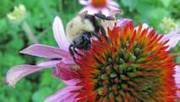 Bees more than merit protection - TheChronicleHerald.ca | Bees and beekeeping | Scoop.it