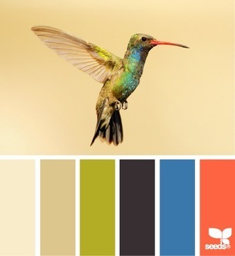 Design Seeds® | for all who ❤ color | hummingbird hues | design | Scoop.it