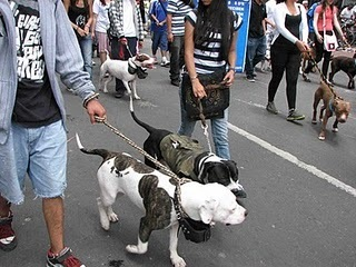 Mike's Bogota Blog: Marching for Animal Rights | Animal Cruelty | Scoop.it
