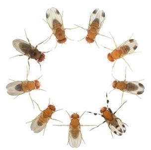 Mécanismes et fonctions des motifs colorés dans la nature   EntomoScience   Scoop.it