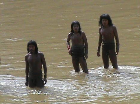 文明と接触したことのない原住民「イゾラド」を初めて撮影したNスペがすごいことになっている! 国分拓ディレクター・独占インタビュー   Ayahuasca  アヤワスカ   Scoop.it